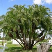 Lee County Landscaping, Fort Myers FL