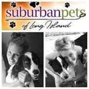 Suburban Pets Dog Walking and Pet Sitting, Massapequa Park NY