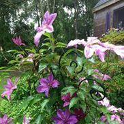 Lily's Garden Herbals, Wakefield RI