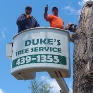 Dukes Tree Service, Helena MT