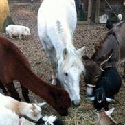 Pet Parties Plus, LLC, Grayson GA