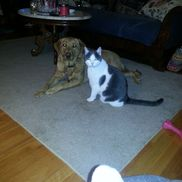 """Wiggles """"N"""" Whiskers Home Pet Care LLC., East Granby CT"""