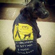 Very Important Pets - VIP Dog walking & Pet sitting, Falmouth MA