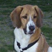 Buster's Bark-ery Treats, Chino Hills CA