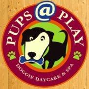 Pups@Play, Livingston NJ