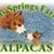 Bay Springs Farm Alpacas, Cape May NJ
