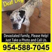 Dezzy's Second Chance Animal Rescue, Delray Beach FL