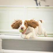 Ziegler Images / Pet Photography, Jacksonville FL