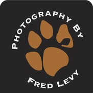 Fred Levy art -  Photography, Maynard MA