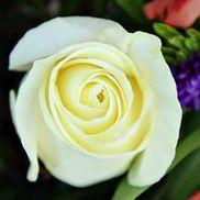 Rachel's Roses L.L.C. A Cedarburg Flower  Market, Cedarburg WI