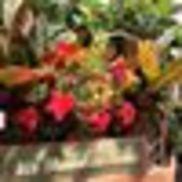 Garden Gate Nursery
