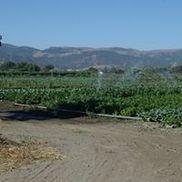 Miramonte Farms and Nursery, San Juan Bautista CA