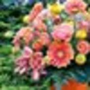 Summit Floral LLC, University Place WA