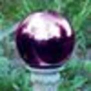 Purple Globe Acres Inc., Westfield NC