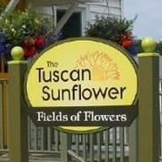 The Tuscan Sunflower, Bennington VT