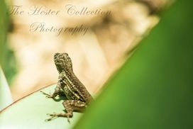 The Hester Collection, Largo FL