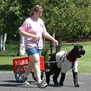 Bright Star Pet Services, Crystal Lake IL