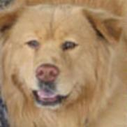 Furry Fellas Dog Walking & Pet Sitting Service, Coventry RI