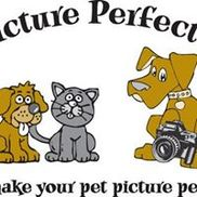 A Picture Perfect Pet Grooming LLC, Melbourne FL