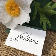 Folium Paper Flowers, Dorchester MA