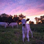 Herondale Farm, Ancramdale NY