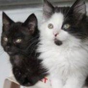 Cat Connection, Sherman Oaks CA