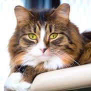 Cats Cradle Shelter Inc, Fargo ND