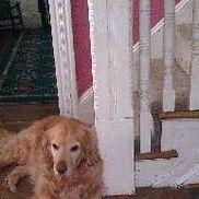 Lorraine's Pet & House Sitting Services, Secane PA