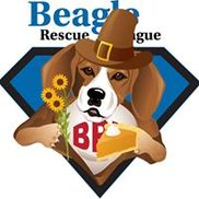 Beagle Rescue League, Inc, Yardley PA