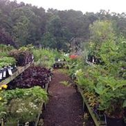 Bayberry Gardens Nursery & Landscaping, Truro MA
