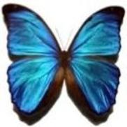 Butterfly Beach Media , Santa Barbara CA