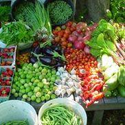 Earthly Delights Farm, Boise ID