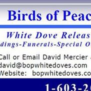 Birds Of Peace - White Dove Releases, Auburn NH
