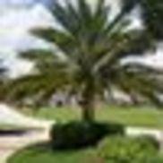 Vellone's Landscape & Nursery, Inc., Loxahatchee FL