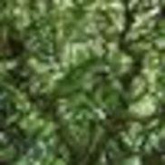 Green Oak Systems, Denver CO