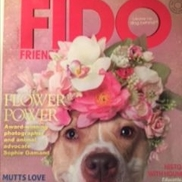 Fido Friendly Magazine, Livingston NJ
