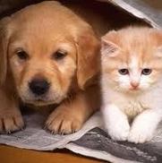 In Home Pet Care, Kirkland WA