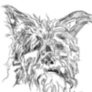 Motley Dog Dog Training LLC, Broomfield CO