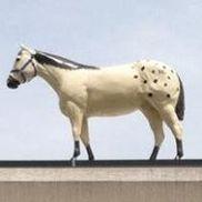 Horse Country, Buford GA