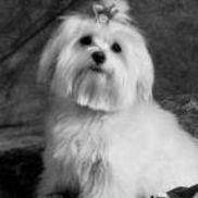 Little Doggie Service, Webster NY