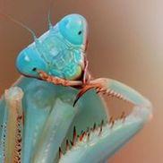 Zoology Pet Sitting Services, Grapevine TX