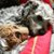 All A-Board! Pet Care, Troy NY
