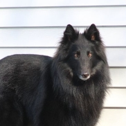 TRIAL READY DOG TRAINING, Massena NY