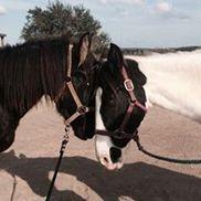 DreamCatcher Horse Ranch, Clermont FL