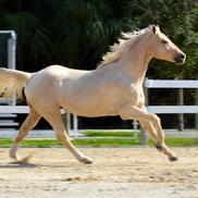 Jaya Jacobs Residential & Equestrian Realtor, Jupiter FL