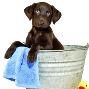 Self serve pet wash by the mutt hutt spaw pet centre inc in the mutt hutt spaw pet centre inc kingston on solutioingenieria Images