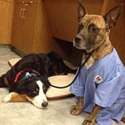 South End Veterinary Clinic, Charlotte NC