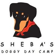 Sheba's Doggy Day Camp, York SC