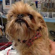 Animal Medical Clinic of Gulf Gate, Sarasota FL