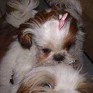 Peter Pam's Puppies, Pet Sitting & Boarding, Bradenton FL